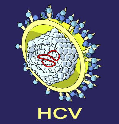 hcv virus